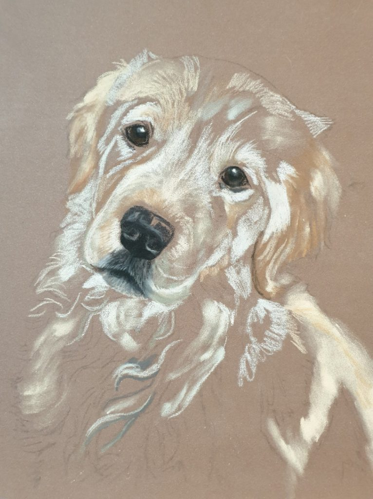 Initial layer's going down on Charlie's dog portrait with pan pastels