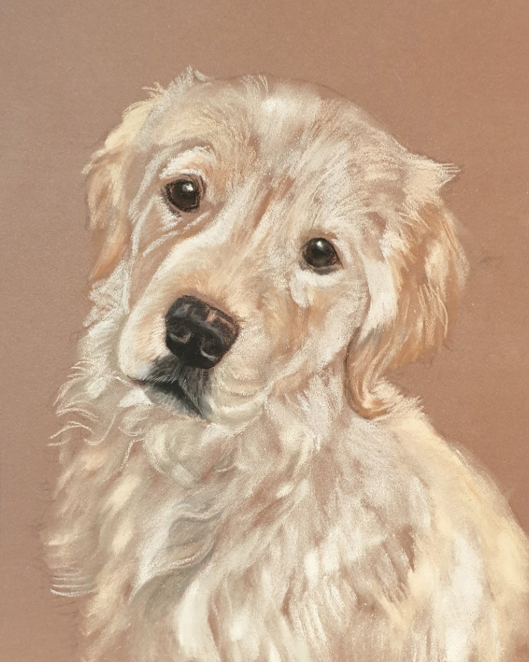 Mainly panpastels put down on Charlie's pet portrait before I add the background and detail