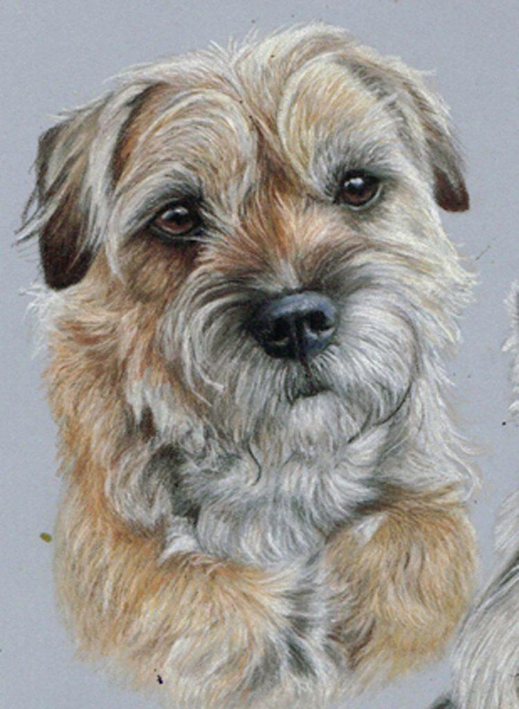 Last border terrier portrait