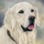Tia, goldren retriever dog portrait in pastels