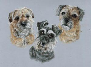 Triple dog pet portrait in coloured pencils