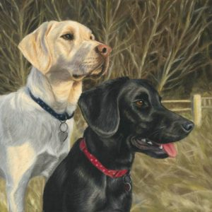 Dog portraits of a black and yellow labrador