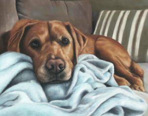 Alfie, fox red labrador dog portrait