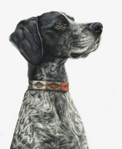 Chaos, dog portrait in coloured pencils