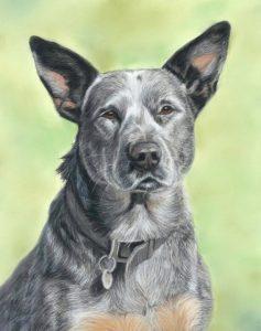 ACD-portrait