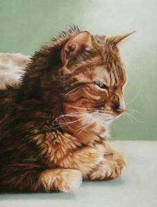 Cat pet portrait