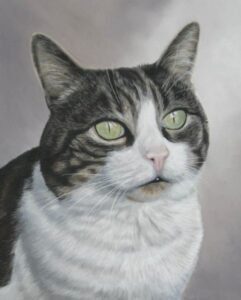 cat-pet-portrait