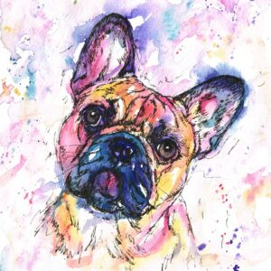 frank-the-frenchie