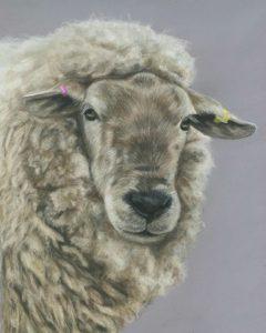 Cookie sheep portrait in pastels