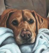 Alfie pastel dog portraits, pet portraits of dogs