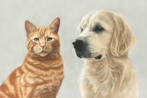Cat and Dog pet portrait