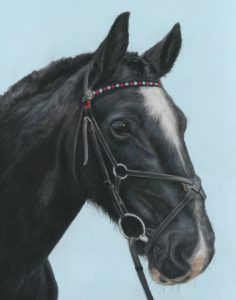 Pet portraits in pastels of Bella the horse