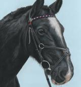 Horse pet portraits in pastels