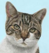 Cat portrait in pastels