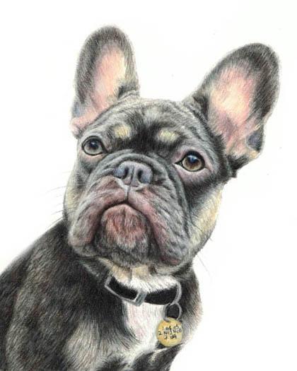 pen & watercolor pet portraits
