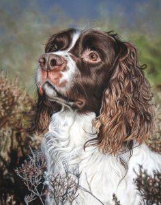 Finn, dog pet portrait, pet portraits of dogs