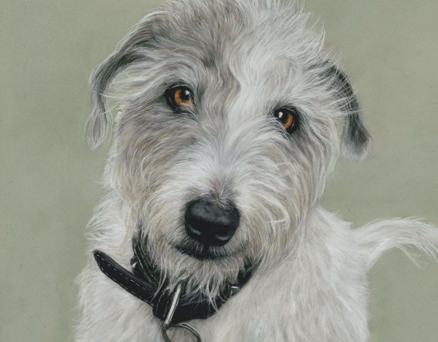 The First Pet Portraits of 2021