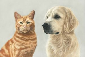 Double pet portrait of a cat and dog