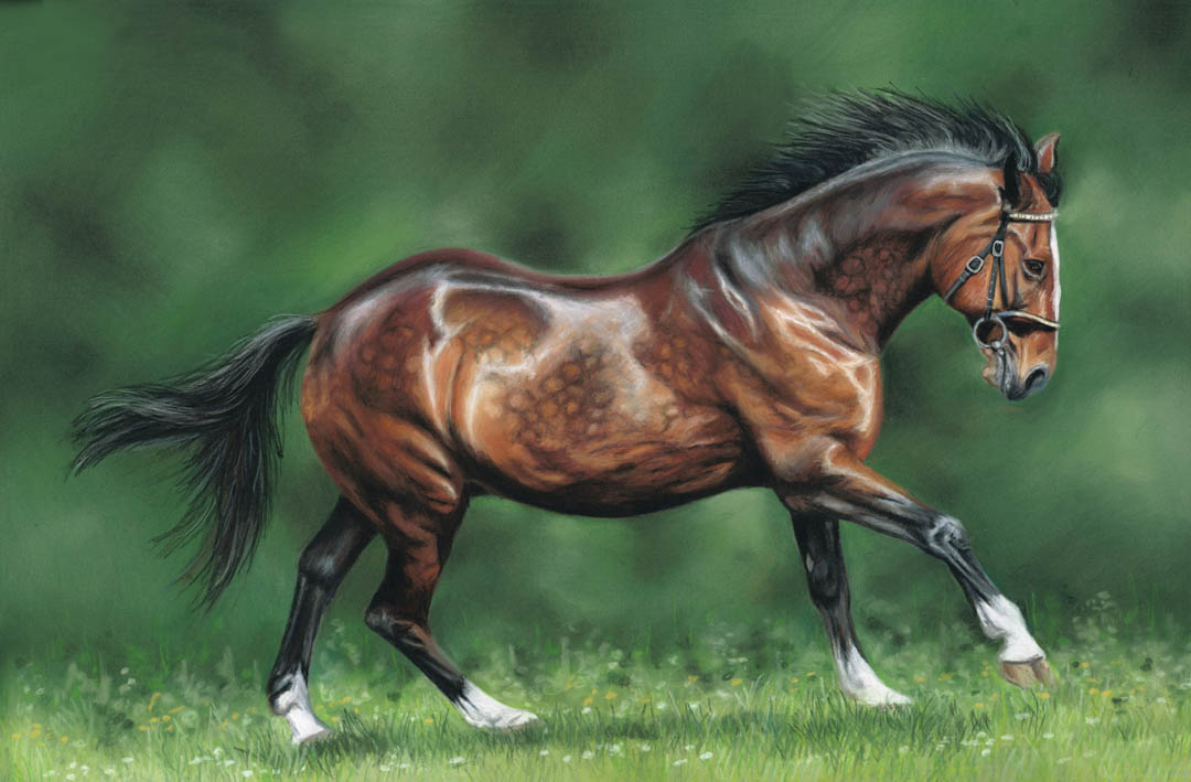 Cantering horse portrait in pastels