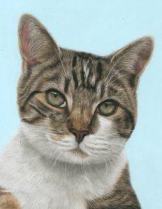 Tabby cat pet portraits in pastels