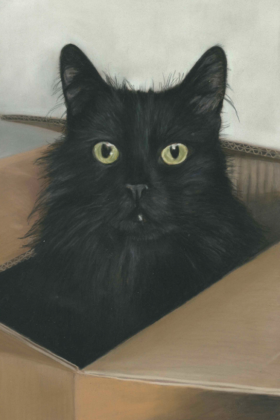 Blackie, cat portraits in pastel