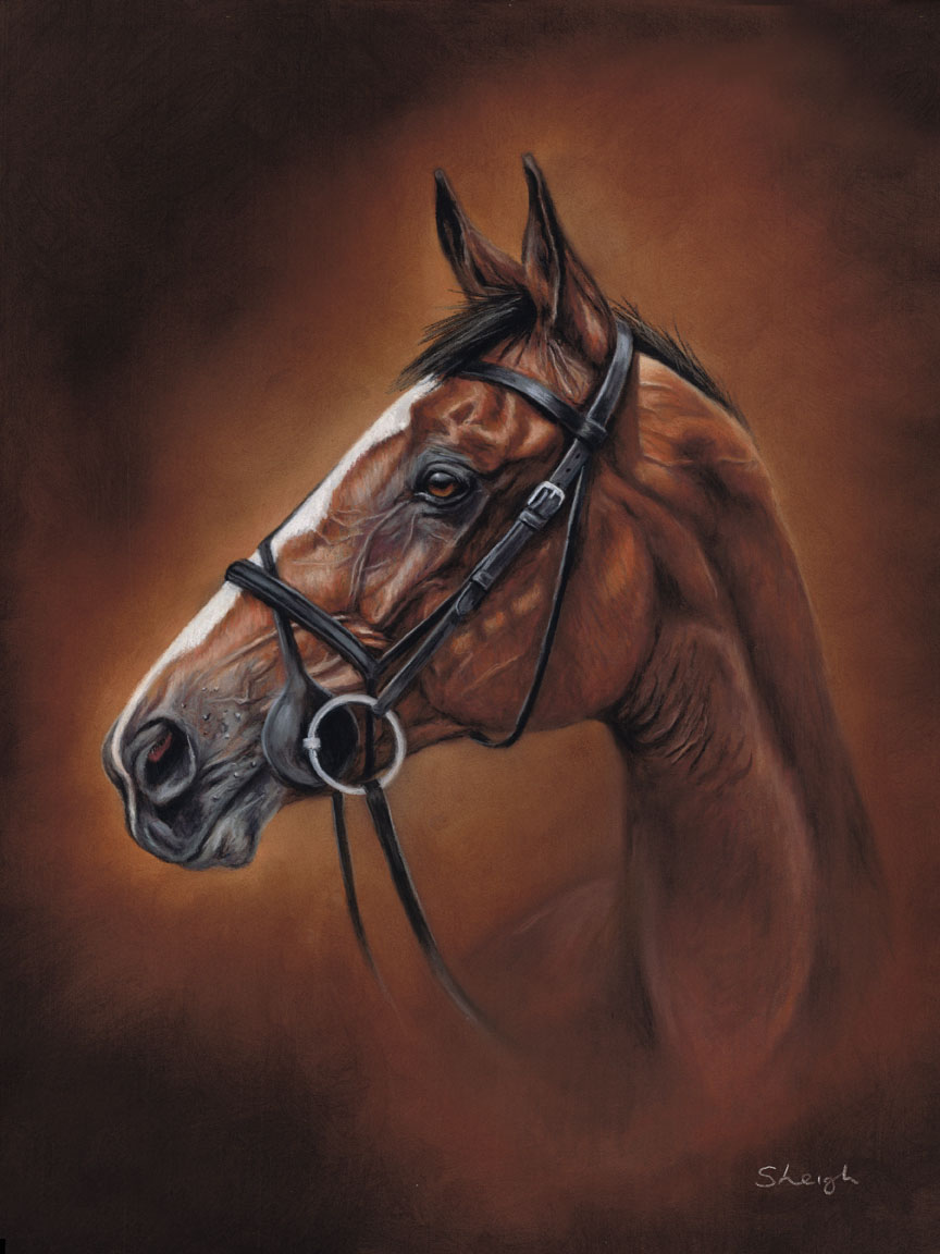 Horse portraits in pastels