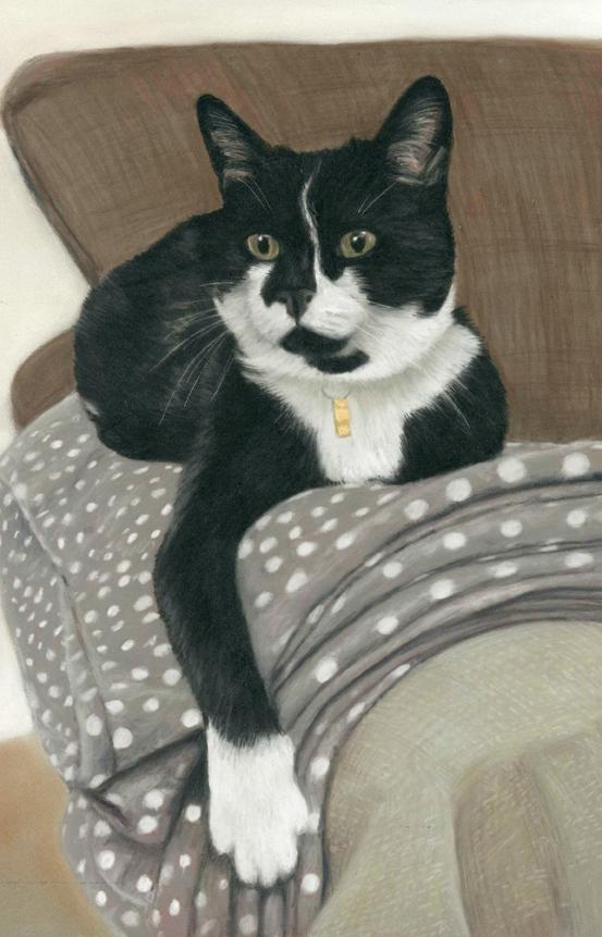 Cat pet portraits in pastel