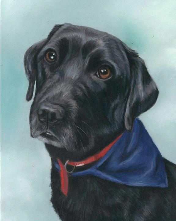 Dog Portrait of a black labrador
