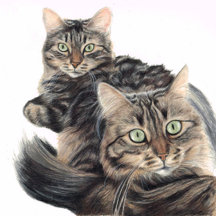 Double cat pet portrait in coloured pencil