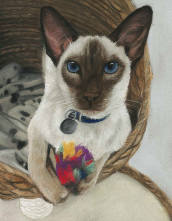 Kato, siamese cat pet portraits in pastels