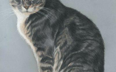 Pet Portraits That Have all Been Cat Portraits