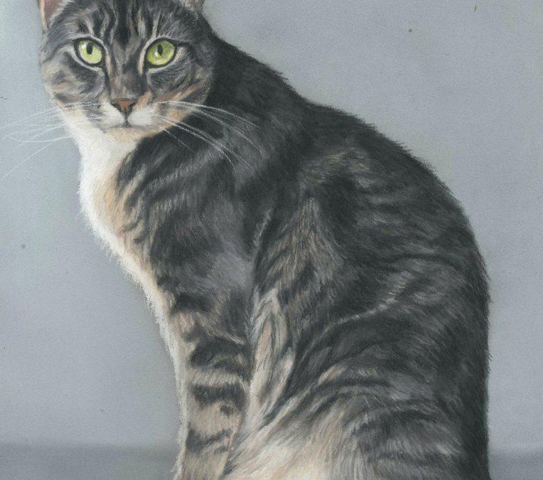 Dexter cat portrait in pastels. Pet Portraits UK commissions